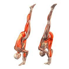 Forward stretch pose, left leg up - Urdhva Ekopadasana left - Yoga ...