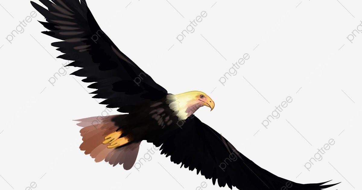 Pin Di Burung Elang
