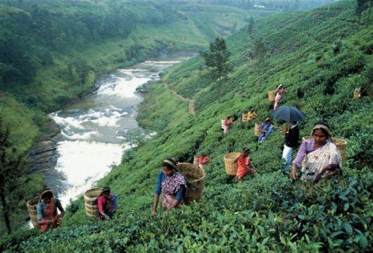 Nuwara Eliya Srilanka Tea Pickers Wabg Reads Sri Lanka Pinterest Sri Lanka Beautiful