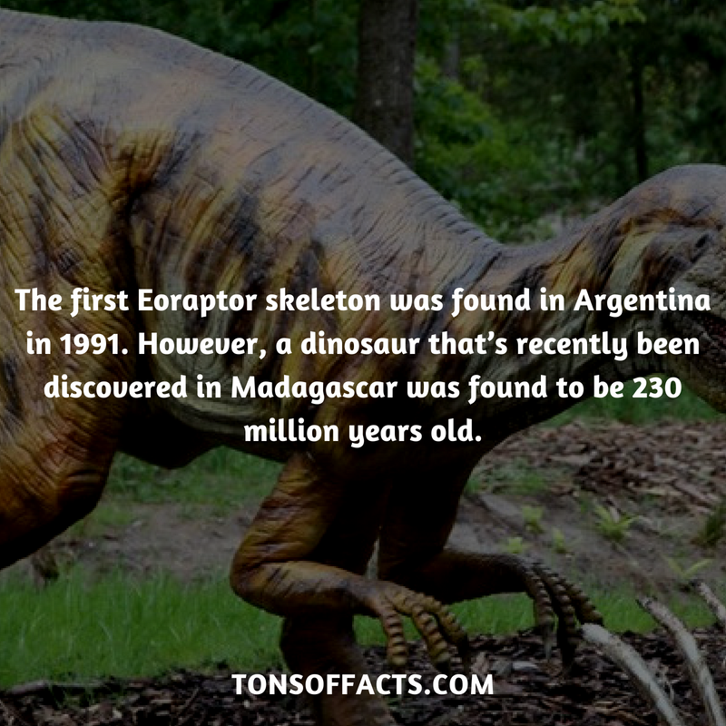Eoraptor fun facts think