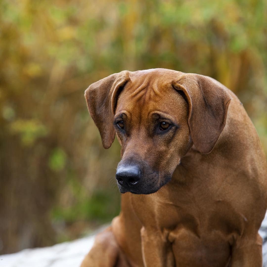 Bezaubernd Schöne Hunderassen Ideen Von Erkunde Erstaunliche Hunde, Schöne Hunde Und Noch