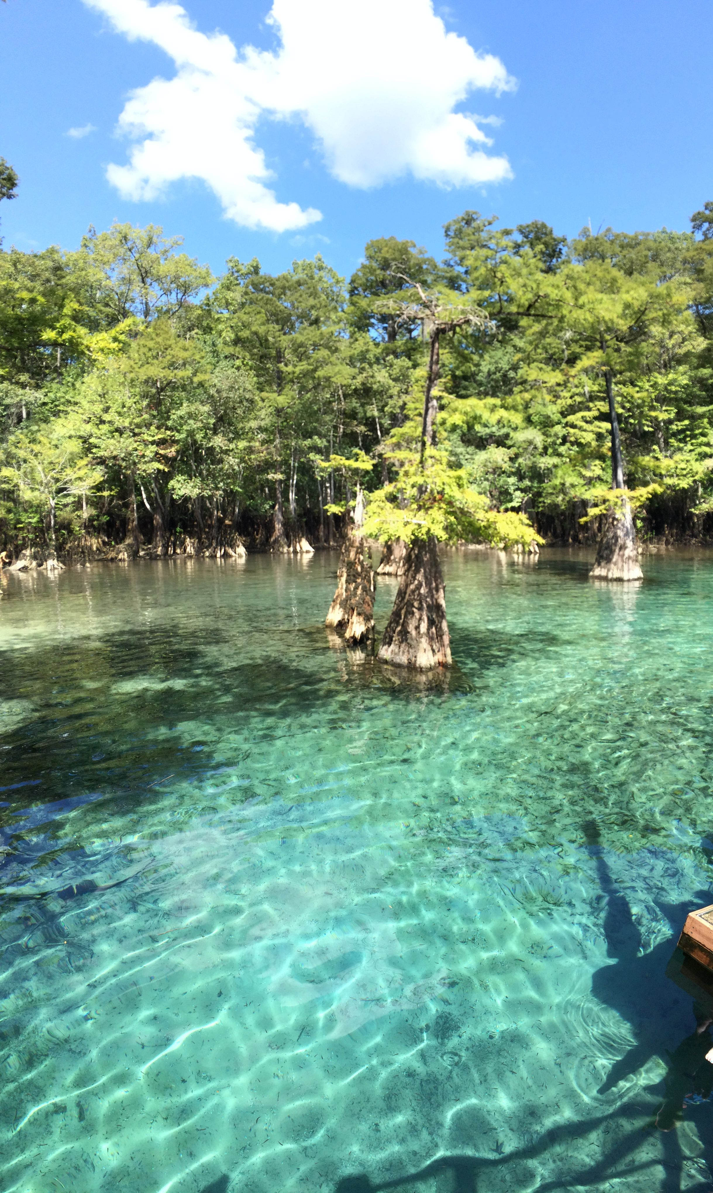Morrison Springs Fl Weekend Trips In 2019 Florida Camping Florida Travel Florida Springs
