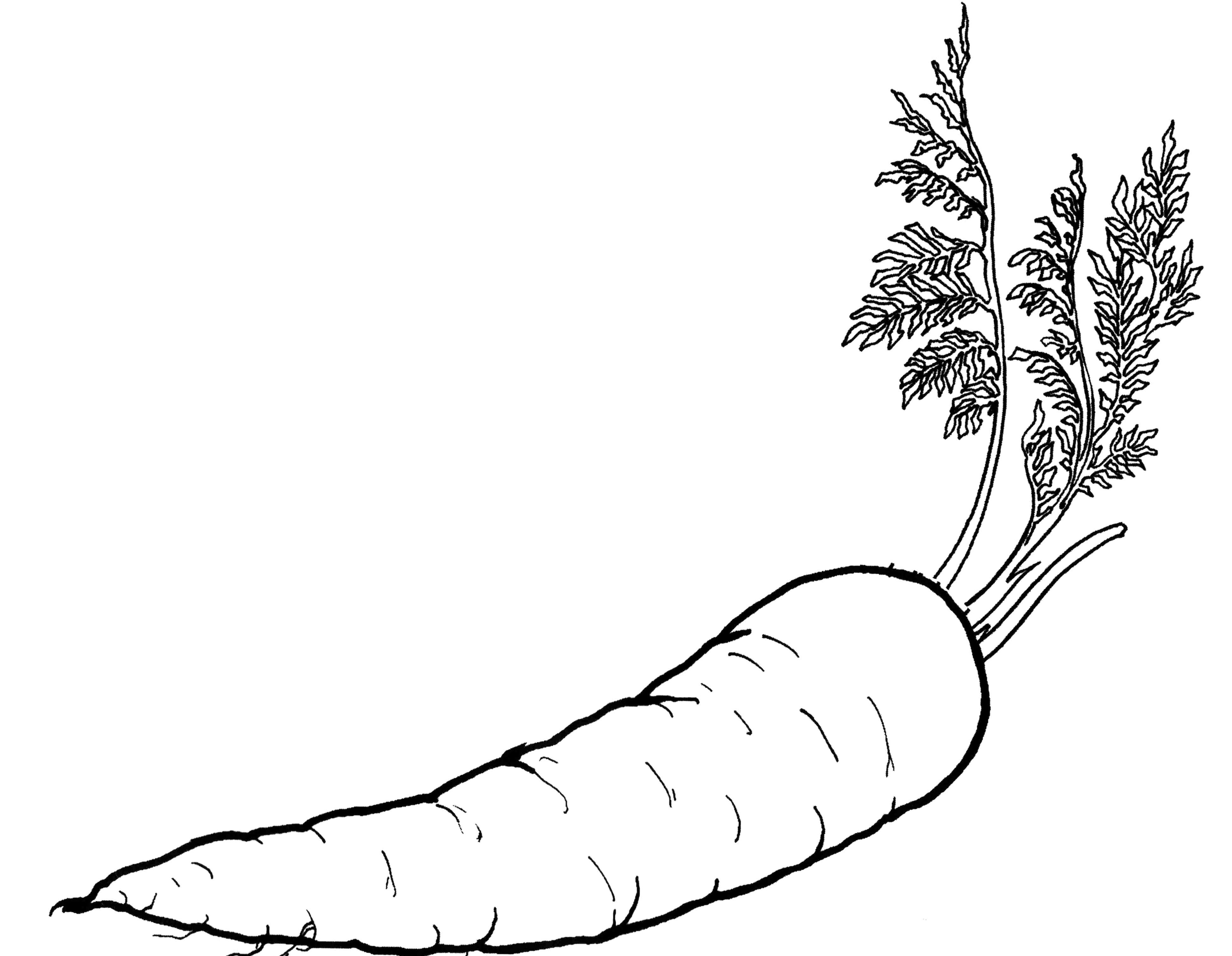 Vegetables Carrots Are Good For The Body Coloring For Kids Vegetable Coloring Pages Fruit Coloring Pages Food Coloring Pages