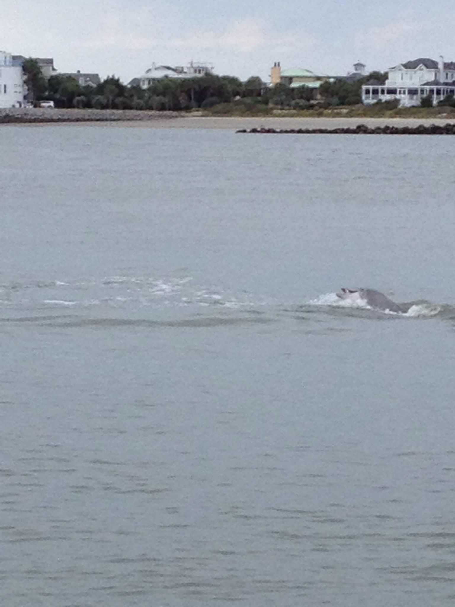 Dolphin playing at breach inlet isle of palms sc pinterest dolphin playing at breach inlet nvjuhfo Choice Image