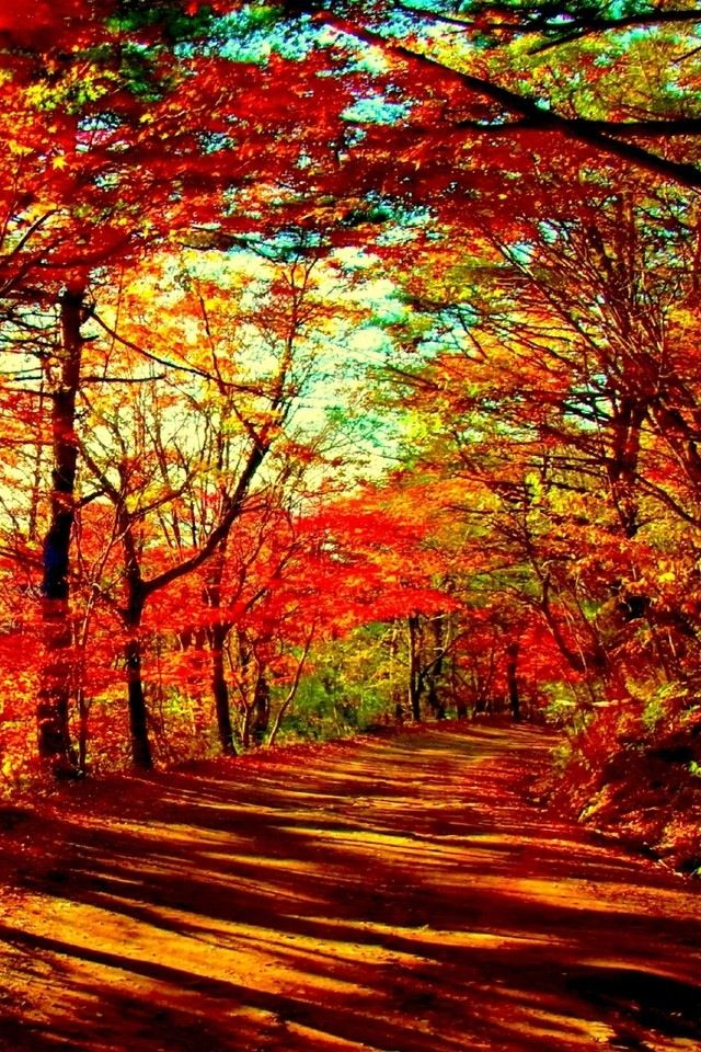 Red Trail Fall wallpaper, Autumn scenery, Autumn forest