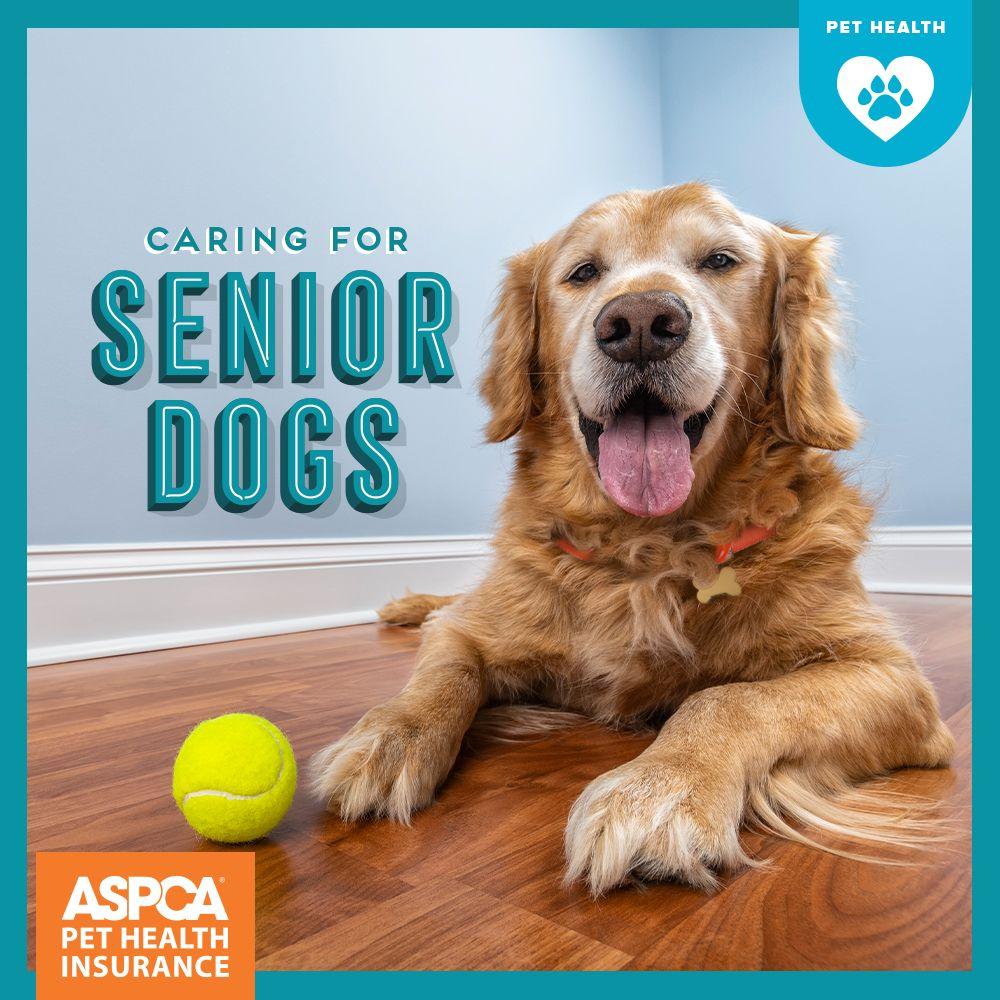 Caring For Senior Dogs Senior Dogs Care Senior Dog Dog Care