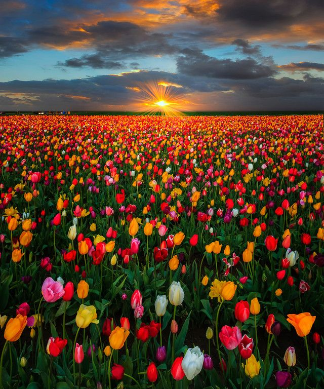 Last Moments Of Warmth Wooden Shoe Tulip Farm Oregon Makes Me Think Of Wizard Of Oz Beautiful Flowers Beautiful Nature Nature Photography