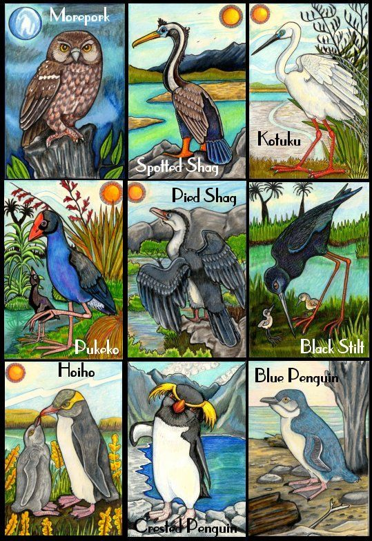 New Zealand Bird Art Collectible Cards Felt Bird Art New Zealand Art Maori Art
