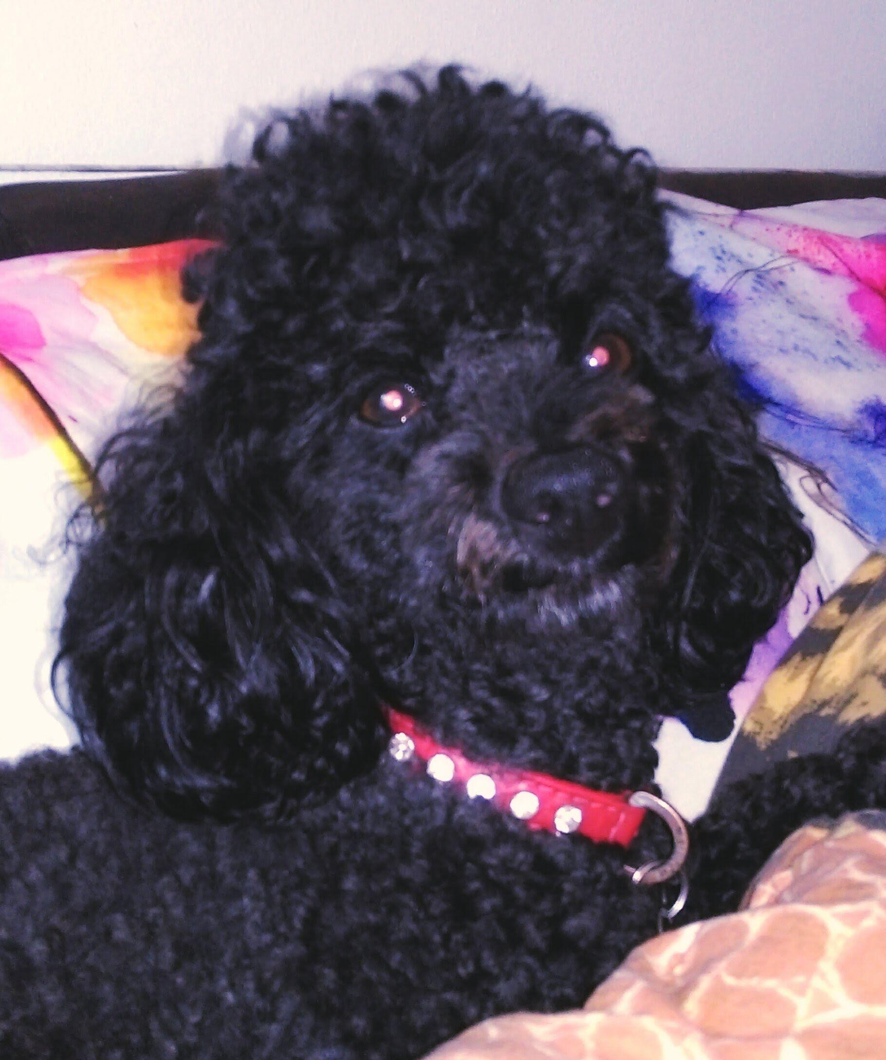Hunde Foto: Christina und Speedy - Hund des Tages Hier Dein Bild hochladen: http://ichliebehunde.com/hund-des-tages  #hund #hunde #hundebild #hundebilder #dog #dogs #dogfun  #dogpic #dogpictures
