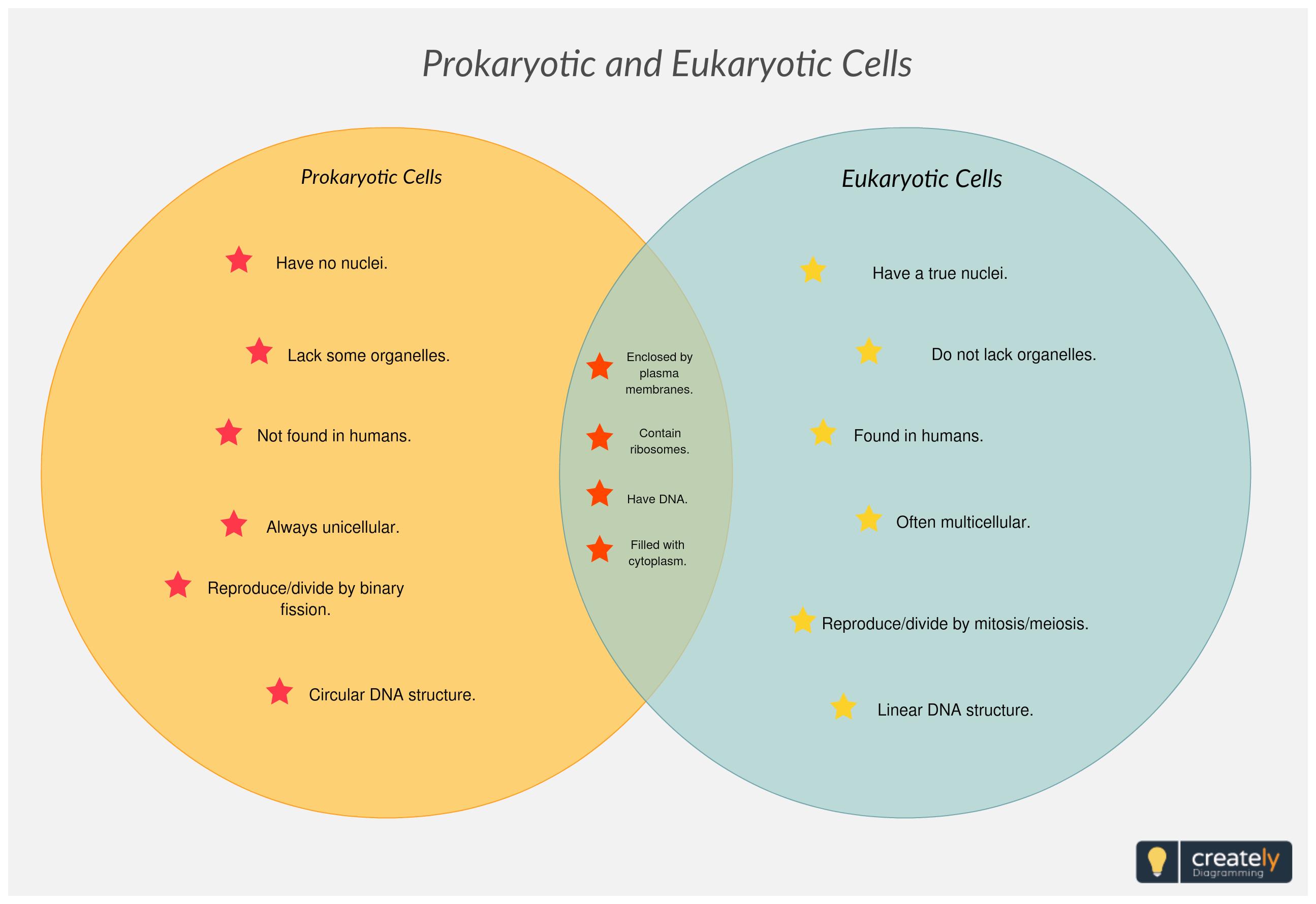 Comparing Prokaryotic And Eukaryotic Cells Prokaryotes