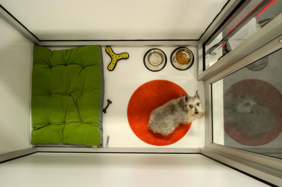 like the glass front, flooring, clean look Dog daycare