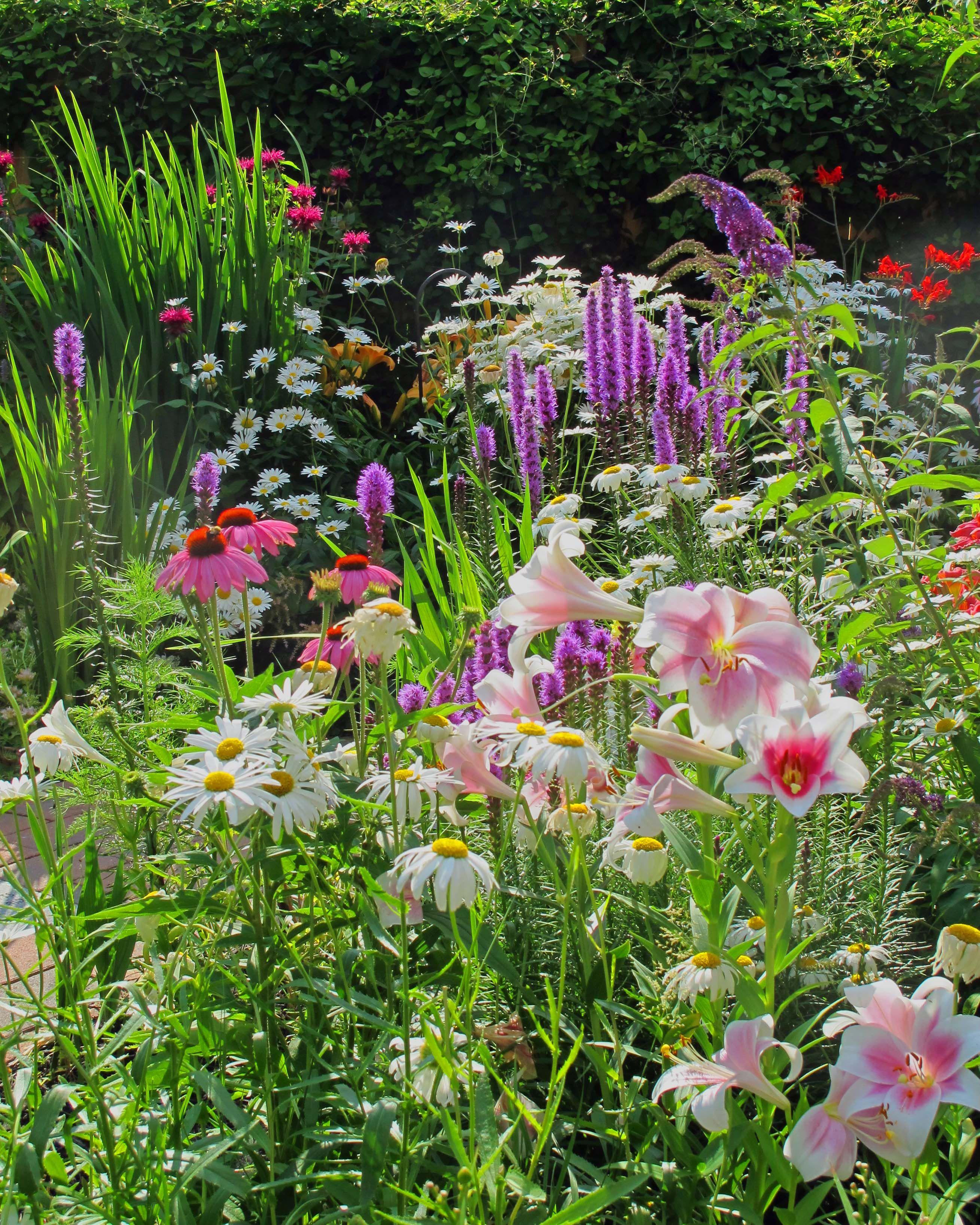 Cottage garden flowers Daisies Liatris Lilies Crocosmia