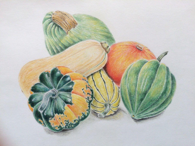 pumpkin drawing color. original colored pencil vegetables still life drawing,seasonal winter painting,kitchen decor,original drawing pumpkin color