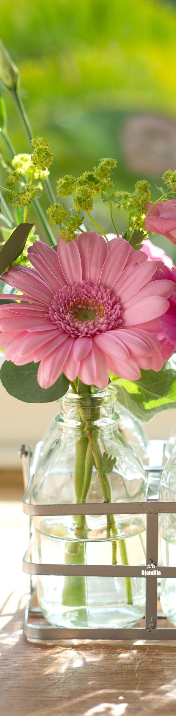 Spring Flowers The Art Of Loveliness In 2018 Pinterest Flowers
