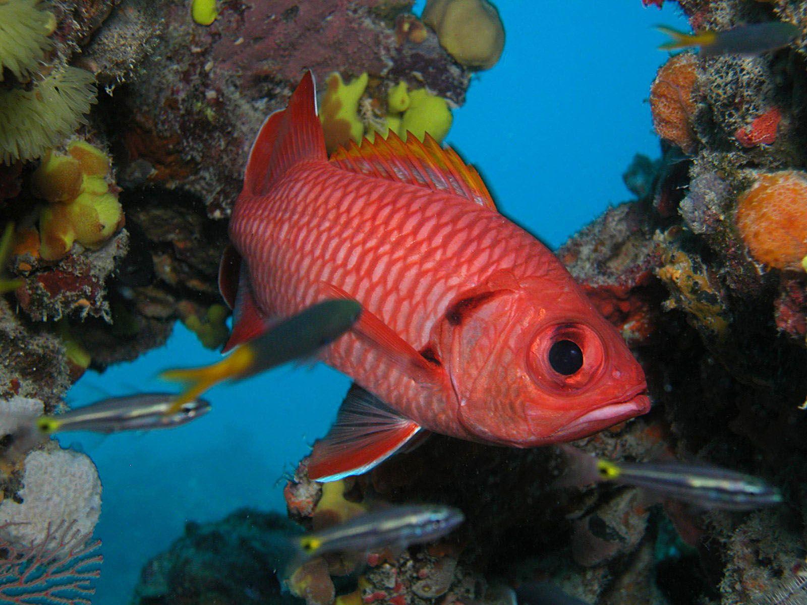 съедобные морские рыбы картинки очень сильно