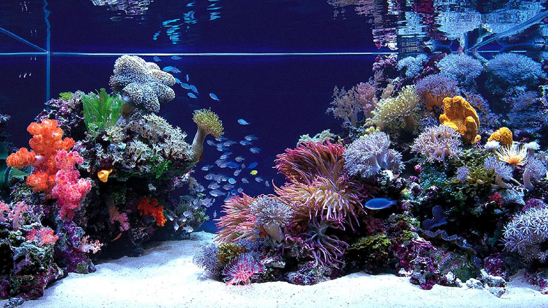Fish Jumping Out Of Aquarium Hd Desktop Wallpaper Widescreen 1920 1080 Aquarium Wallpapers 38 Wallpa Saltwater Fish Tanks Saltwater Aquarium Marine Aquarium