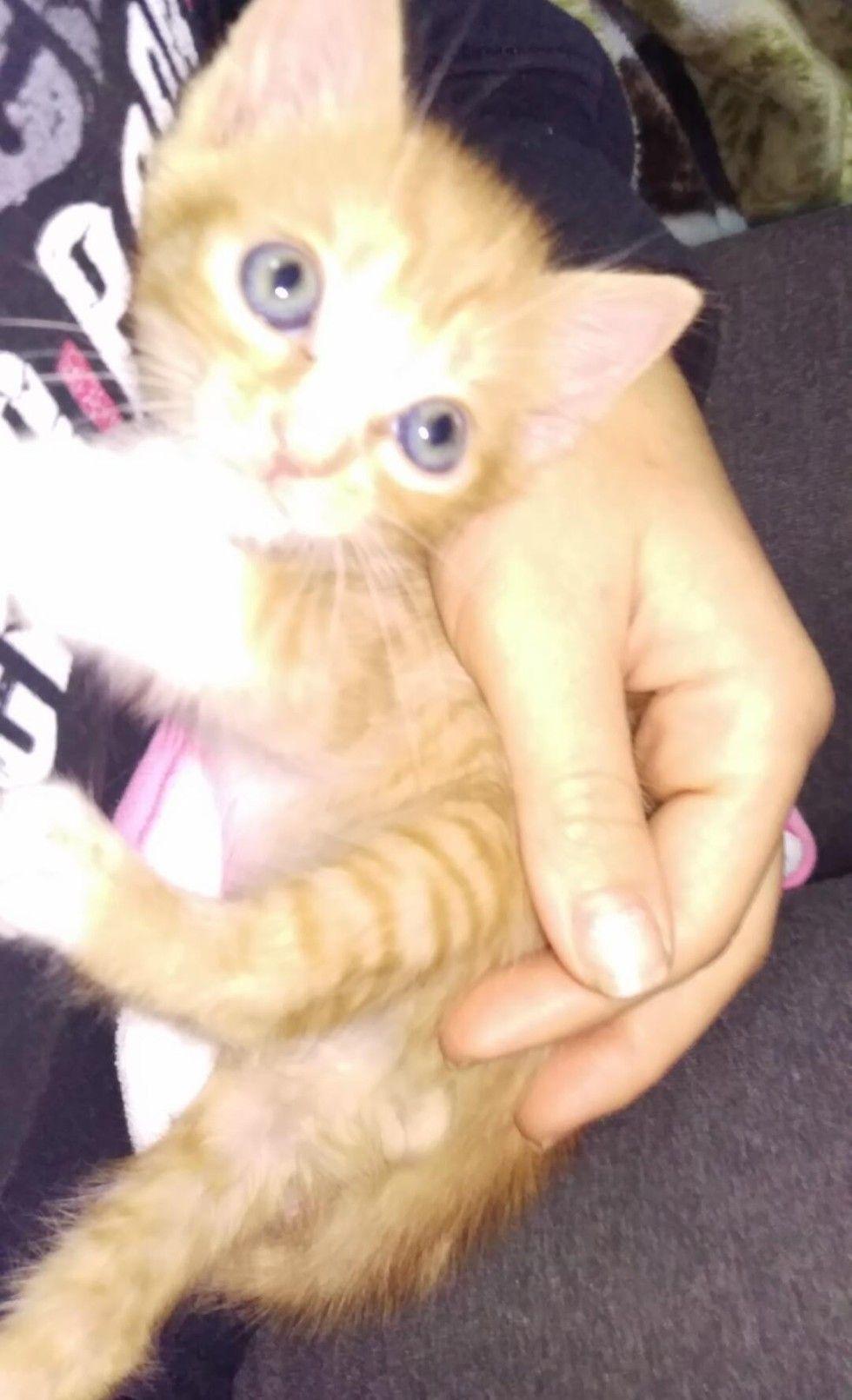 The Joy When Rescue Kitten Runs In His New Wheelchair Kitten Rescue Kitten Tiny Kitten