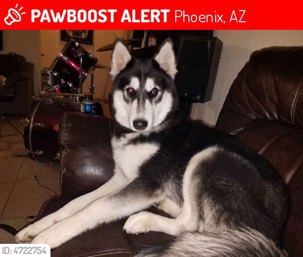LOST Ziggy LAST SEEN August 16, 2017 Phoenix, AZ 85051