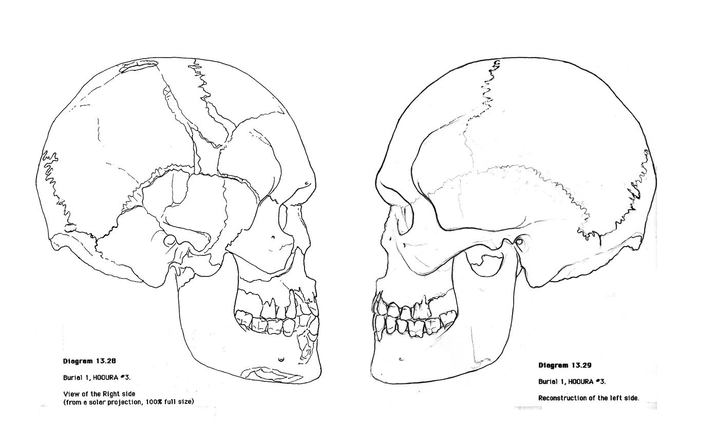 Anatomy Printable Coloring Pages With Images
