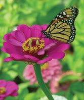 Gardening for you & butterflies at the same time. @burpee