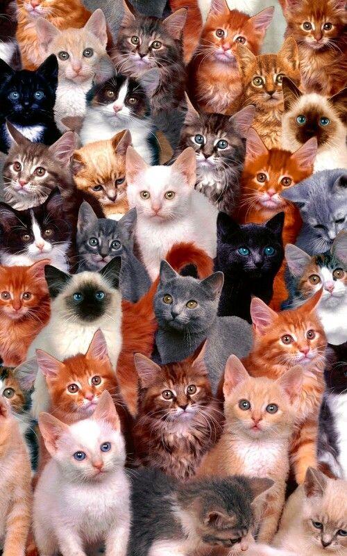 Muchos lindos gatitos