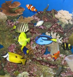 Saltwater fish yellow tang blue hippo tang clownfish for Blue clown fish