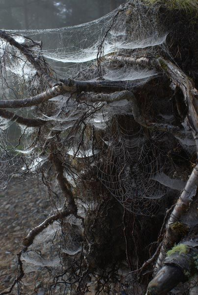 Tree Shrouded In Spiderwebs 不気味 蜘蛛の巣 蛇 骨