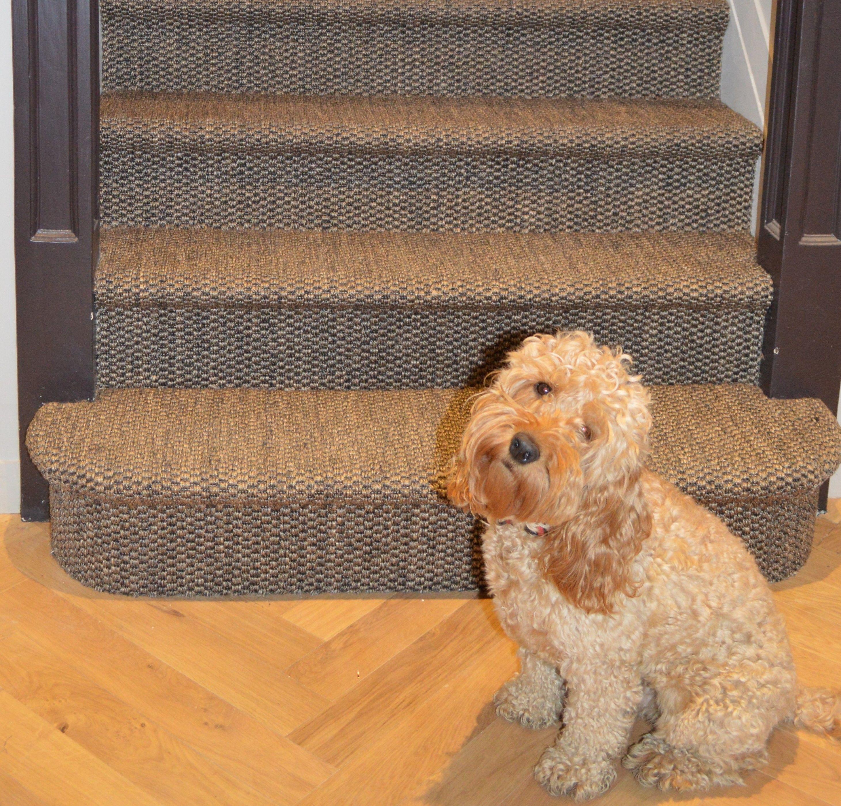 Rug Runner For Dogs: Sisal Stair Carpet With Bullnose & Cute Dog.