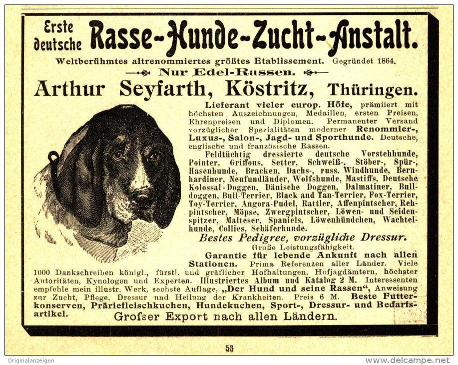 Original Werbung Inserat Anzeige 1903 Rasse Hunde Zucht Anstalt Arthur Seyfarth Kostritz Ca 90 X 115 Mm Hunde Rasse Werbung
