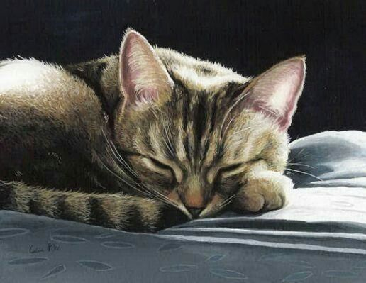Pin By Pirjo Raila On Celia Pike Artist Cat Painting Watercolor Cat Cat Art Illustration