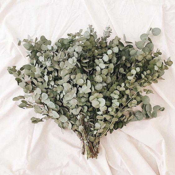 eukalyptus im bund der sorte cinerea ein toller duft. Black Bedroom Furniture Sets. Home Design Ideas
