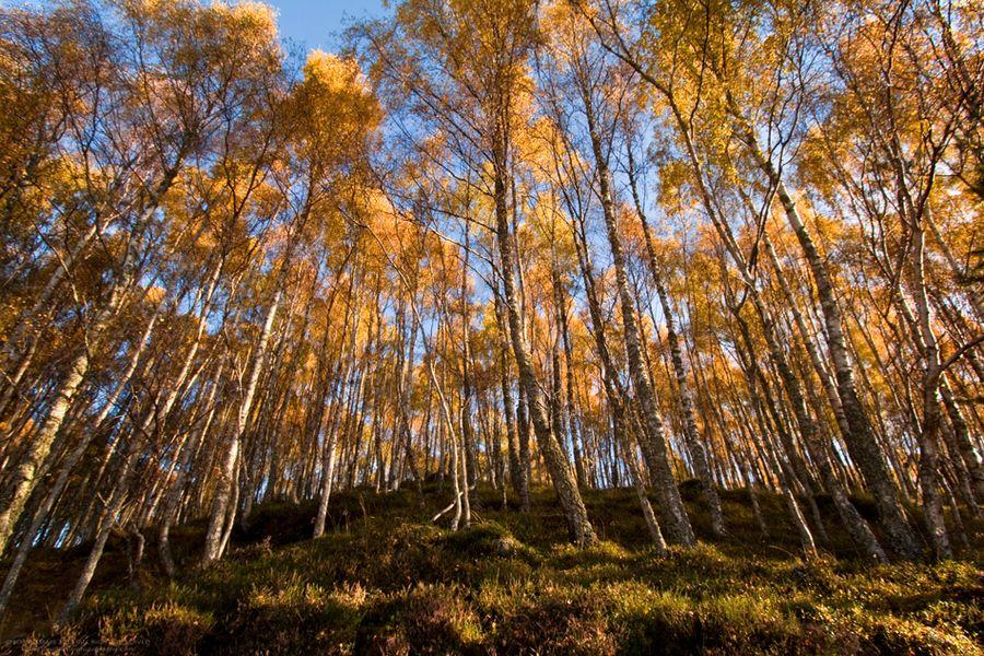 Tree Line by Jo Williams, via 500px