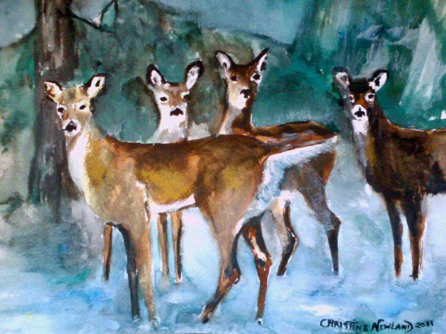 This is a water colour of some deer in my friend's yard.