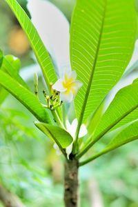 Hawaiian Wedding Reception Ideas thumbnail