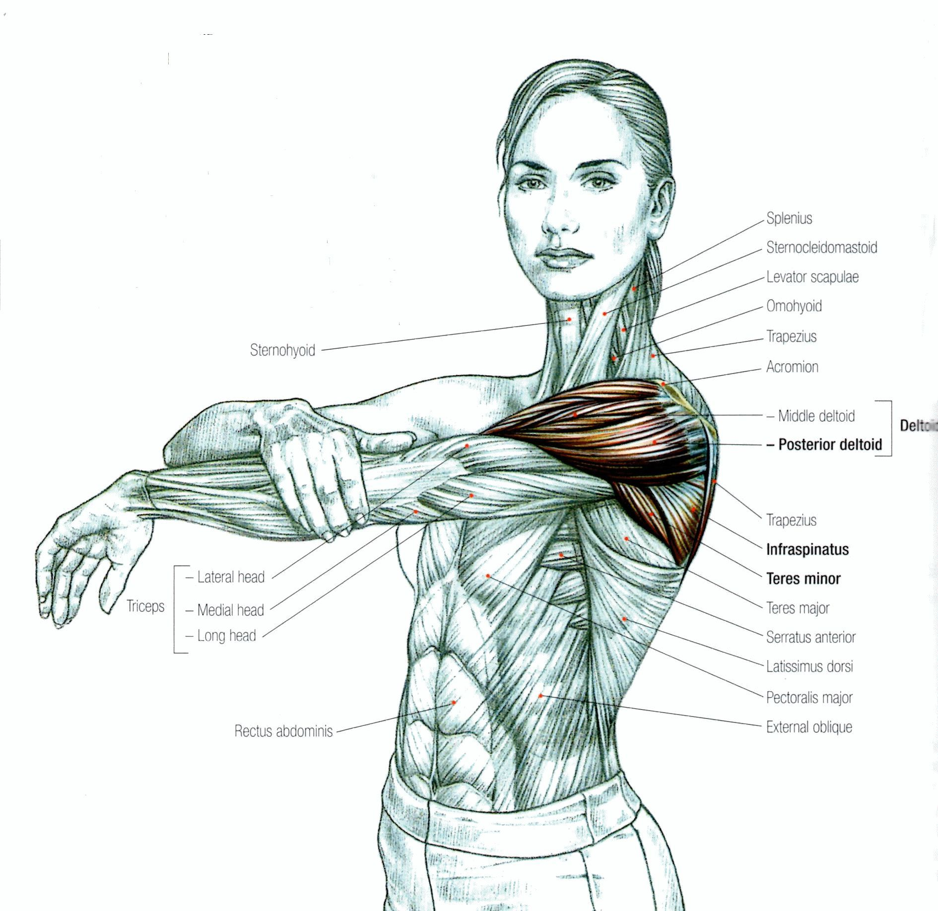 Stretching: How to Stretch the Shoulder | FITNESS | Pinterest ...
