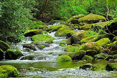 Cascading Mountain Stream Mountain Stream Cascade Mountains Forest Pictures