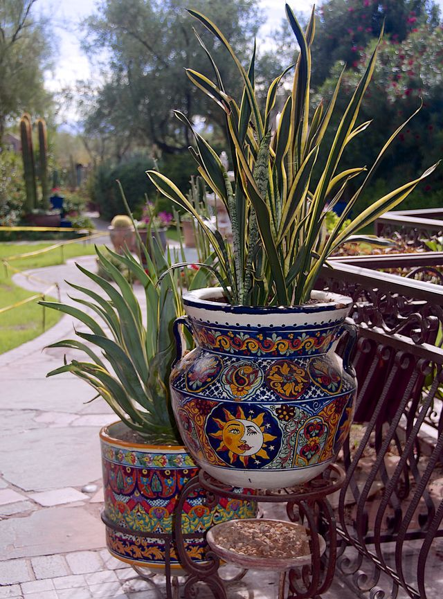 How to Grow and Care for Indoor Palm Trees Container