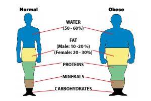 healthy body woman