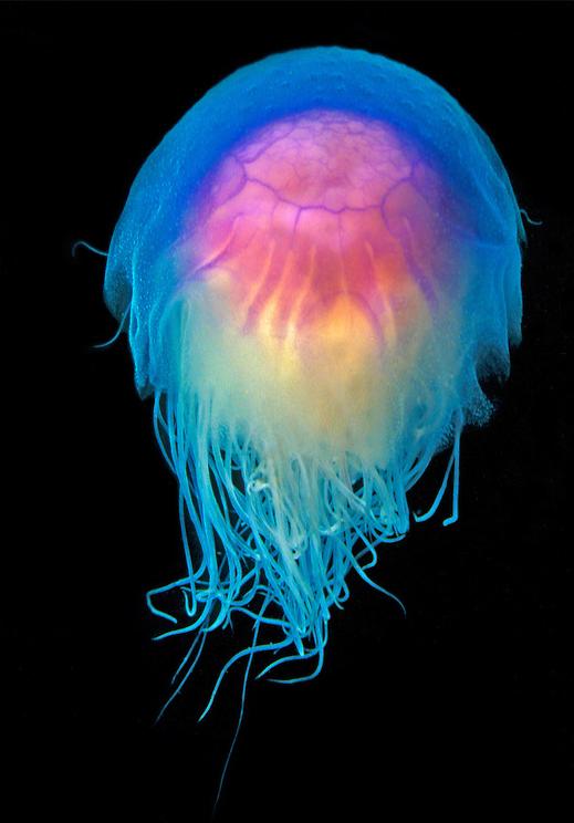 Eclectic Irony Ocean Animals Deep Sea Creatures Ocean Creatures