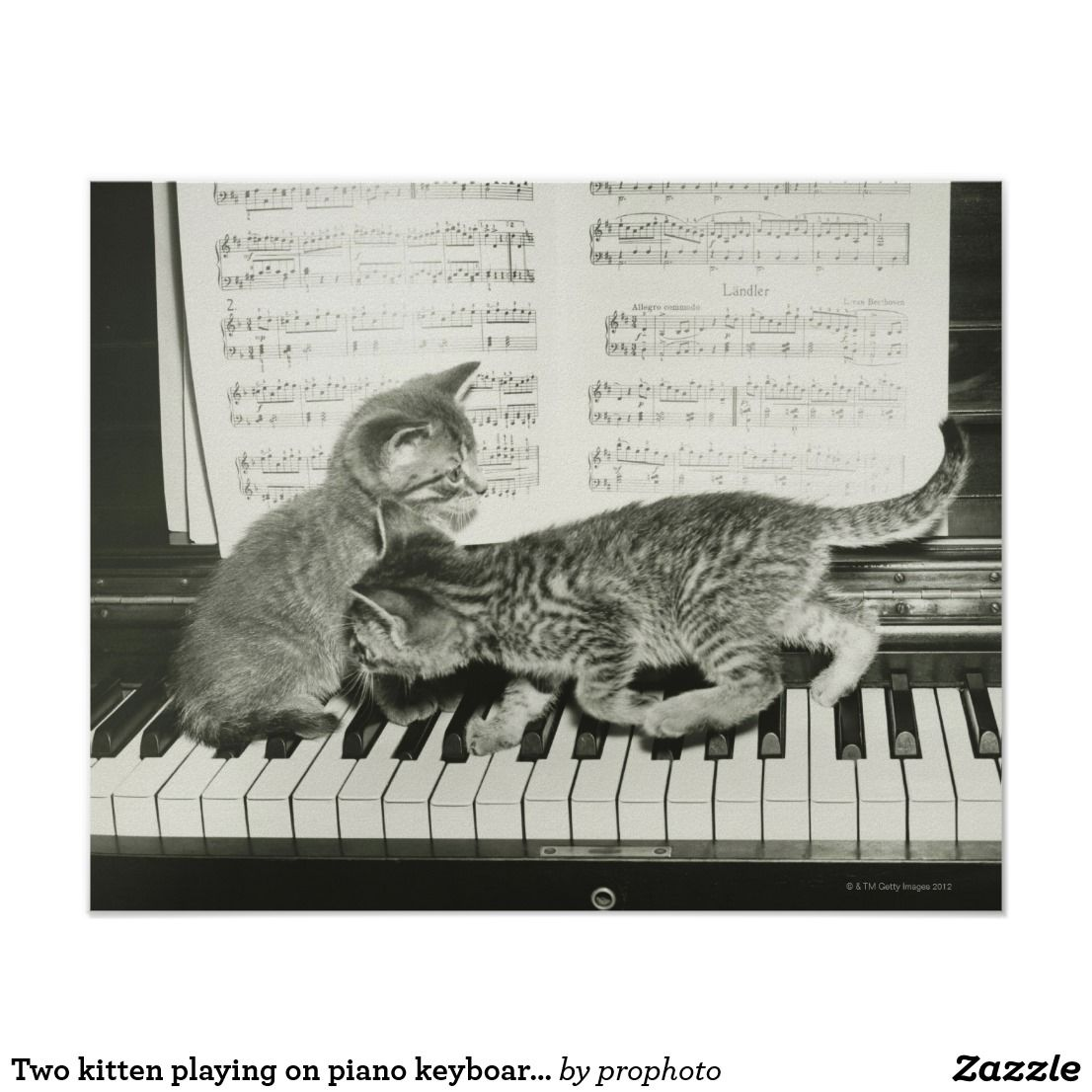Two Kitten Playing On Piano Keyboard B W Poster Zazzle Com Kittens Playing Cute Cats Kittens