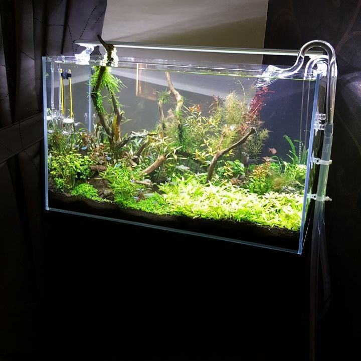 Aquascaping is an art. To learn more about aquascaping ...