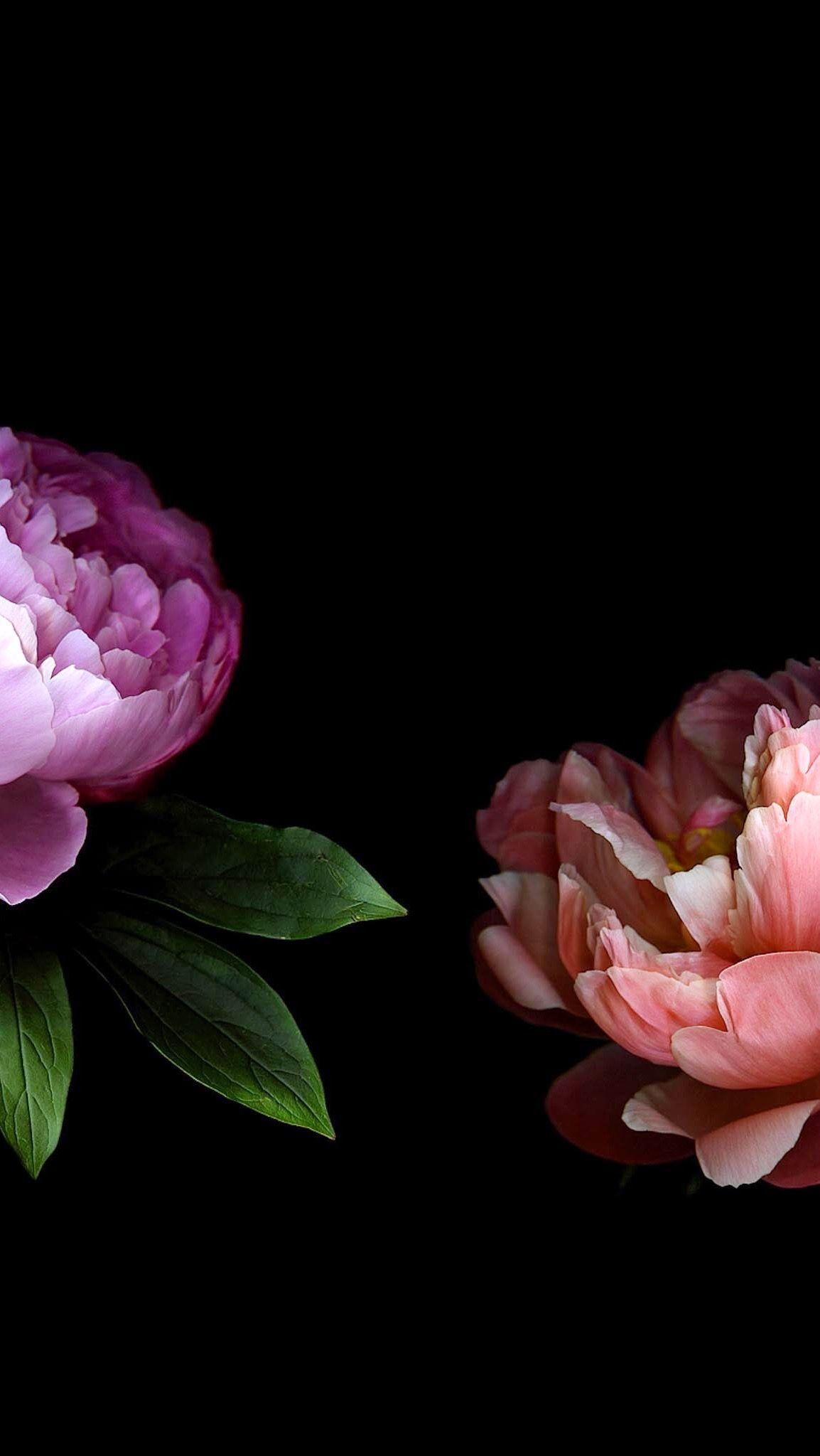 Peonies Via Glediola Alija Floral Wallpaper Iphone Peony Wallpaper Dark Flowers