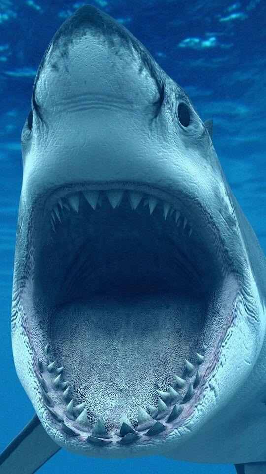 bdd512338 Super tubarão Branco