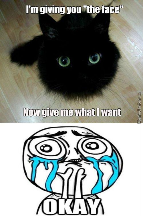 Meme Center Largest Creative Humor Community Kittens Funny