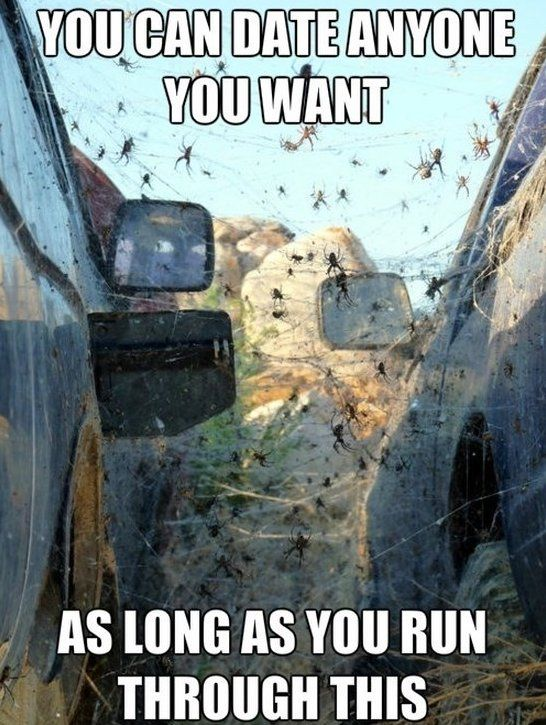 dc3434c8c38d4b13a7cc644e91c9653f would you do it ? www meme lol com funny gifs pinterest