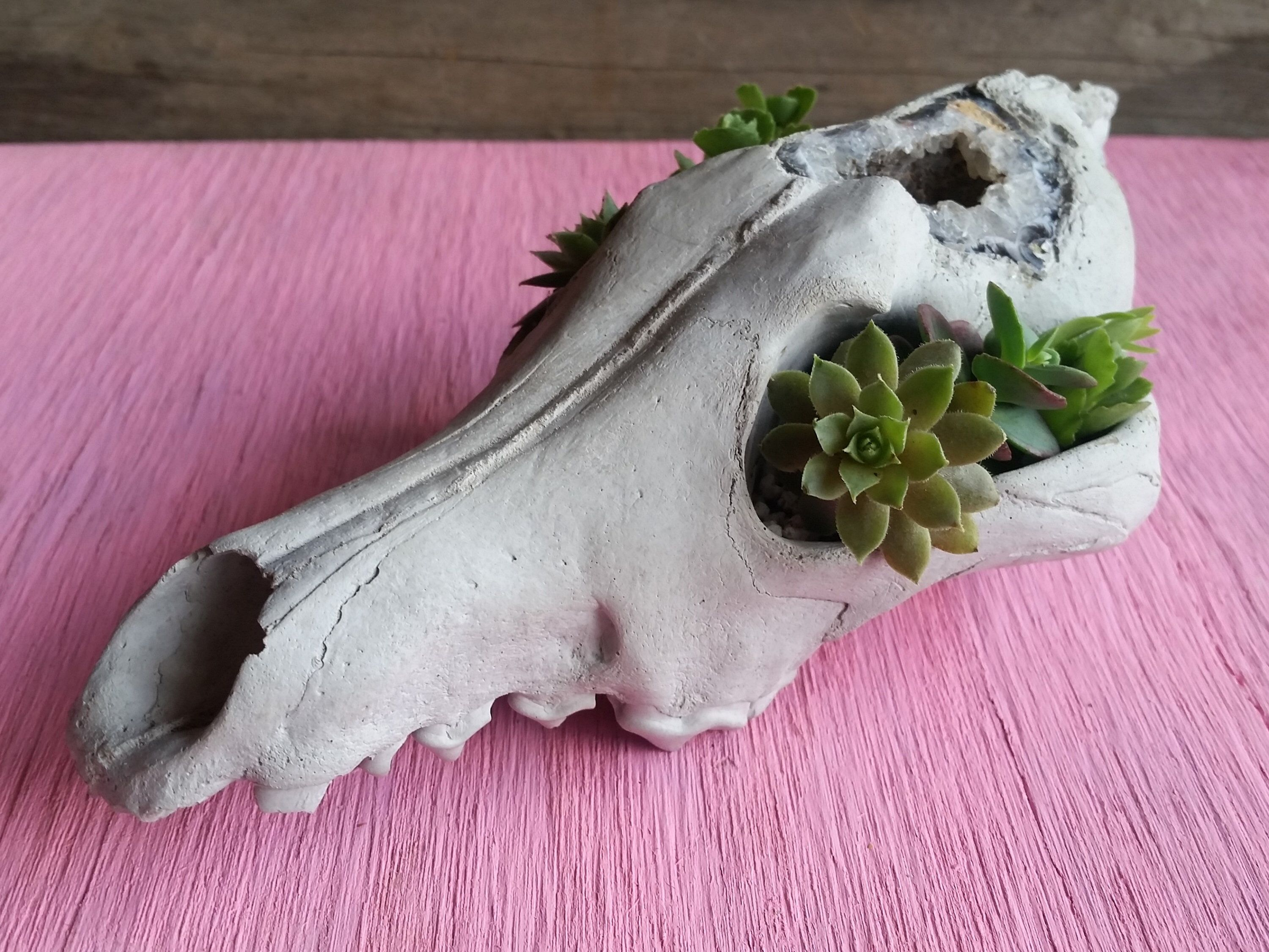 Coyote skull crystal geode bones creepy cute cement cactus