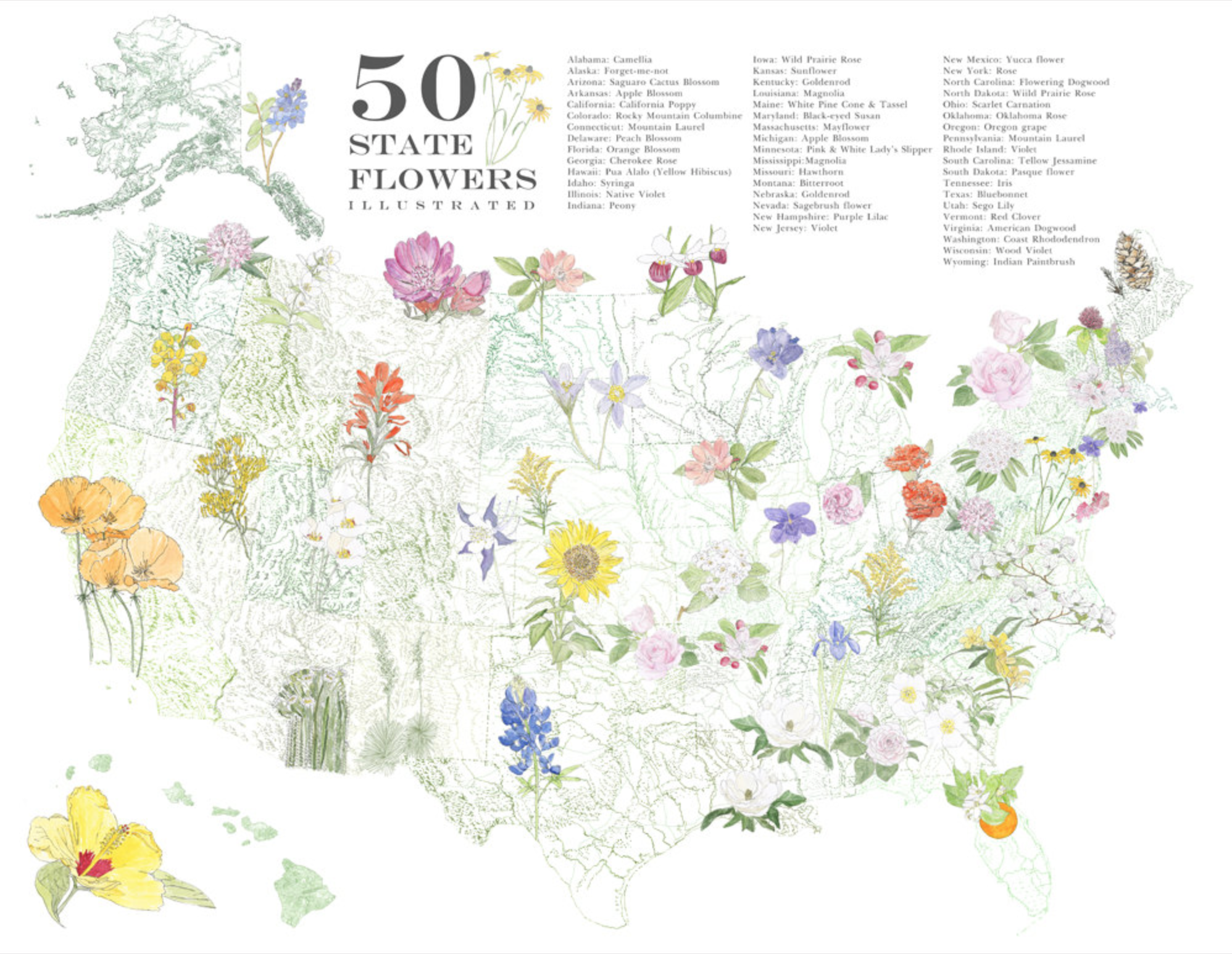 Wildflower Map A Pictorial Of American Flowers State United States