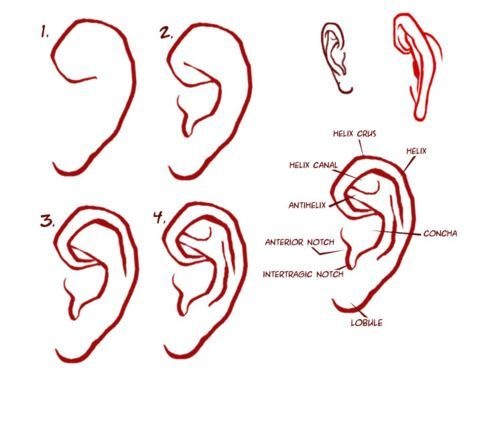 Character Anatomy Ears In 2020 How To Draw Ears Portrait Drawing Face Drawing