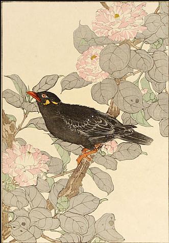 IMAO KEINEN 1891