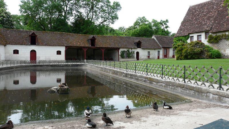 1- La ferme et le parc du château de Chenonceau. - La ferme du XVI°s et le Parc de 70 hectares sont également accessibles aux visiteurs.- FERME DU CHÂTEAU: L'ensemble datant du XVI°s comprend les écuries de Catherine de Médicis, un potager et un atelier floral où travaillent aujourd'hui 2 fleuristes pour la mise en fleurs des pièces du château. Le potager accueille plusieurs variétés de légumes et de plantes, dont plus de 400 rosiers.